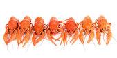 Tasty boiled crayfishes isolated on white — Stock Photo