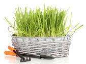 Sepette beyaz izole yeşil çimen — Stok fotoğraf