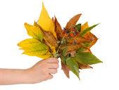 Skład żółty jesienią liście w tle biały — Zdjęcie stockowe