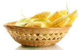 Fresh corn in basket, isolated on white — Stock Photo