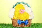 Beautiful chrysanthemum in basket on grass on green background — Stock Photo