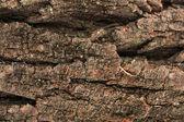 Brown bark background — Stock Photo