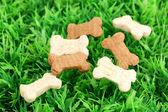 Alimento seco en forma de hueso para perros en la hierba verde — Foto de Stock