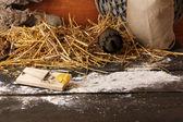 ネズミ捕りを木製の背景上の納屋でチーズの部分を — ストック写真