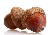 Brown acorns, isolated on white — Stock Photo