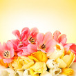 Beautiful tulips on yellow background — Stock Photo