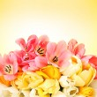 Beautiful tulips on yellow background - Stock Photo