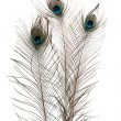 Peacock Feathers on white background — Stock Photo #14341049