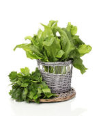 Fresh herbs in wooden pot isolated on white — Stock Photo