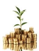 Plant groeit uit gouden munten geïsoleerd op wit — Stockfoto