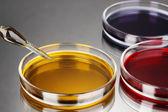 Líquido de color en cajas petri sobre fondo gris — Foto de Stock