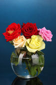 Beautiful roses in glass vase on blue background — Stock Photo
