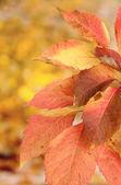 Heldere herfstbladeren, op gele achtergrond — Stockfoto