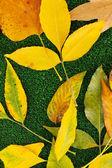 Composição de outono amarelo deixa no fundo de grama — Fotografia Stock