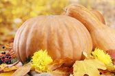 Hojas de calabazas y el otoño, sobre fondo amarillo — Foto de Stock