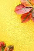 Las hojas de otoño brillante sobre fondo amarillo — Foto de Stock