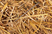 Needle in a haystack close-up — Stock Photo