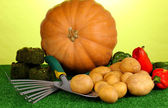 Ripe potatoes with pumpkin and pepper on grass on green background close-up — Stock Photo