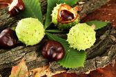 Kaštany s podzim sušené listy a kůra, na dřevěné pozadí — Stock fotografie