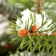 Fir tree branch with snow, close up - Stockfoto