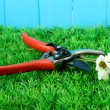 Secateurs with flower on grass on fence background - Stock Photo