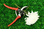 Secateurs yeşil çim zemin çiçek — Stok fotoğraf