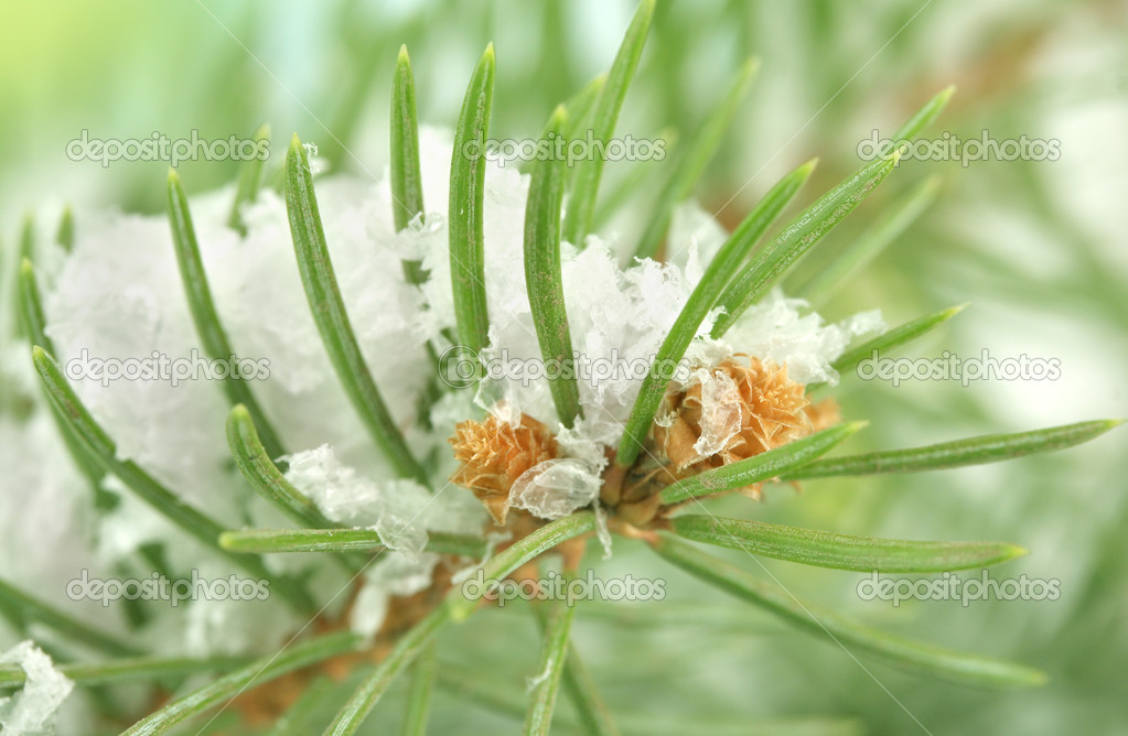 Fir tree branch with snow, close up — Stock Photo #14672847