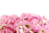 Ramo de flores eustoma, aislado en blanco — Foto de Stock