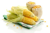 Fresh corn and bags with dry corn, isolated on white — Stock Photo