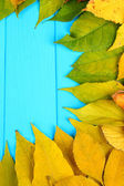 Bright autumn leaves on blue wooden board background — Stock Photo