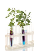 Test-tubes with a colorful solution and the plant isolated on white background close-up — Stock Photo