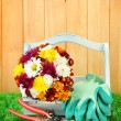 Secateurs with flowers in box on fence background — Stock Photo #14850591