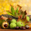 Chestnuts with autumn dried leaves and bark — Stock Photo #14946421