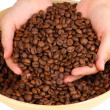 Coffee beans in hands isolated on white — Stock Photo #14946833