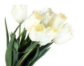 Beautiful tulips isolated on white — Stock Photo