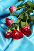 Beautiful vinous roses on blue satin close-up — Stock Photo