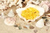 Olej z ryb w powłoce na piasku. pomysł darów morza — Zdjęcie stockowe