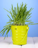 Green grass in bucket on wooden table on blue background — ストック写真