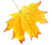 Bright autumn leaf, isolated on white — Stock Photo