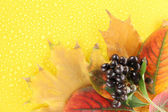Bright autumn leaves and wild berries on yellow background — Stock Photo