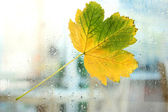 Autumn maple leaf on glass with natural water drops — Stock Photo