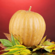 Ripe orange pumpkin with yellow autumn leaves on red background — Stock Photo #15314603