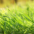 Beautiful green grass with dew, close up — Stock Photo