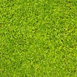 Green lawn close-up — Stock Photo