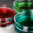 Color liquid in petri dishes on grey background — Stockfoto