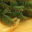 Beautiful fir tree, on golden cloth — Stock Photo