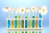 Bloemen in proefbuizen op blauwe achtergrond — Stockfoto