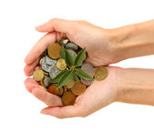 Woman's hands are holding a money tree on white background close-up — Stock Photo