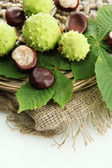 Chestnuts with leaves on burlap, isolated on white — Stock Photo