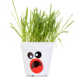 A pot of grass isolated on white — Stock Photo